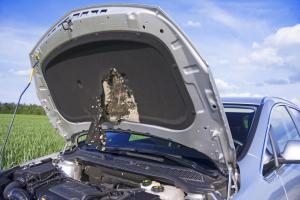 Auto Marderschaden Motorraum